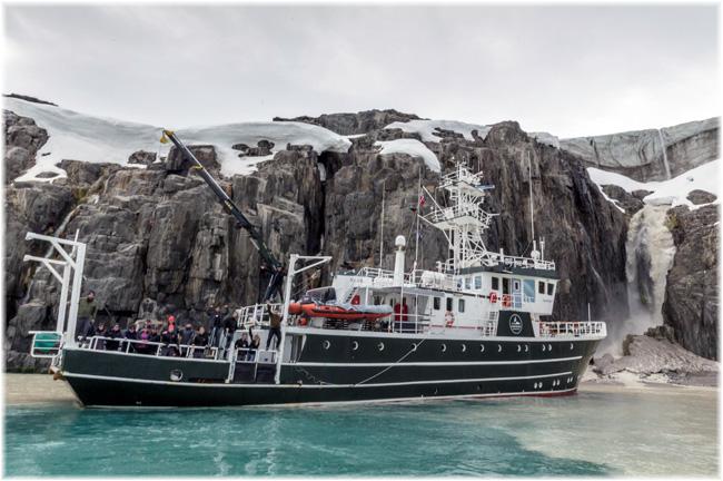 Kinfish at Alkefjellet