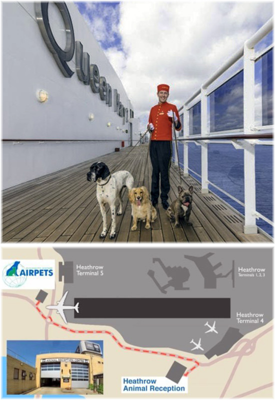 Kennels and cattery on Cunard Line's Queen Mary 2 are usually sold out a year in advance (Credit: Cunard Line) - Airpets is based near Heathrow's Terminal 5
